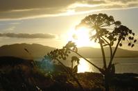 Irland Sunset