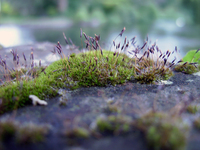 Moss on River Wall