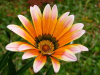 Flowers Flores 12