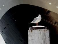 Seagull 'n Ship 1