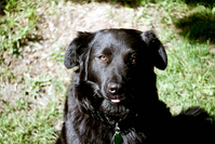 Canine Portrait 3