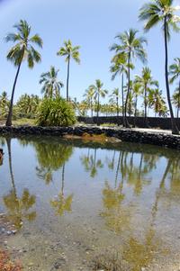 Pu'uhonua o Honaunau 3