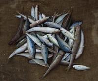 Fish in Paleochora