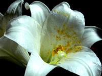 Flower 27