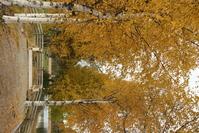 Norwegian autumn 2