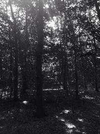 Woodland B&W