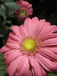 Hawaiian Flowers 14