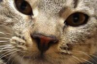 Kittie 1