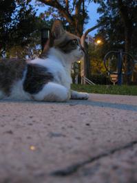 A Calico Cat 3