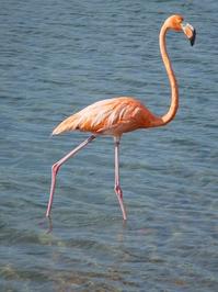 big flamingo 1