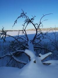 Northern Snow