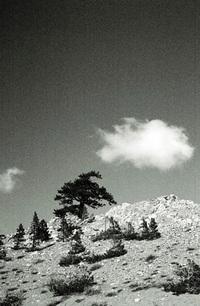 sierra snowfall 4