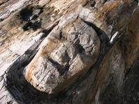 Driftwood Face