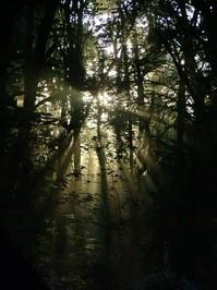 streaming sunlight 3