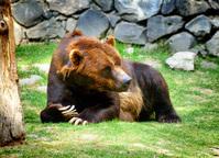Bear - Zacango Zoo