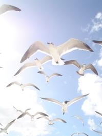 Miami Seagulle