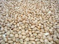 feijao - Bean 2