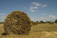 Harvest session::.. 1