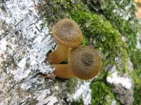 Little snails 11