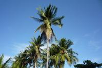 Palm&sun