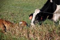 grass fed organic beef