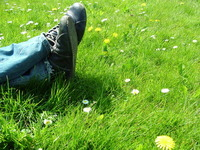 free and in the grass