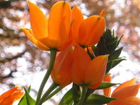 Gelbe Blume - Yellow Flower