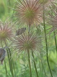 grass - flowers 2