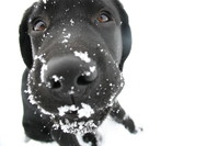 snowy doggy