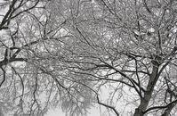 The Irrefutable Beauty of Snow