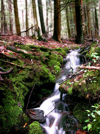 Mossy Stream in Northwest PA