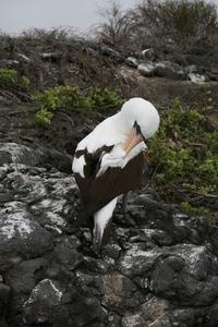 Galapogus Islands 3