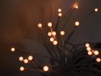 Tentacoli di luce