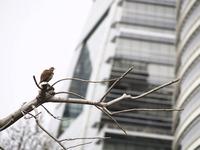 bird lost in the big city 1
