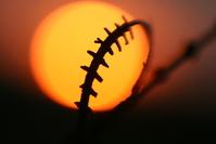 sunset & fence 34