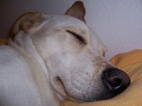 Maggie Sleeping