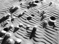 Shells on the beach (b&w)