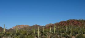 Saguaro Desert Landscape