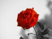 Flower_Sunlight 1