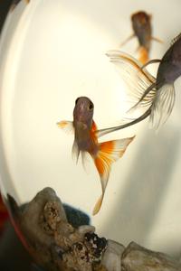 Weird fish 2