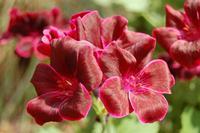 Flower close shot