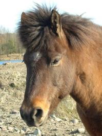 Horses. 2