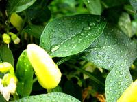 Leaf & water 1