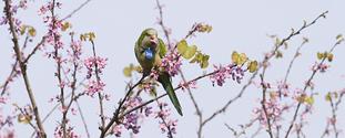 parrot58 9