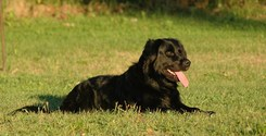 dog education 10