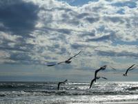 Seagulls 10