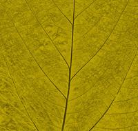 Pastel Leaf 8