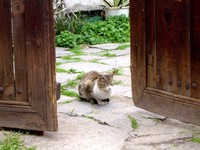 cat in old barnyard