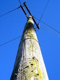 mossy telegraph pole