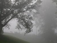 Tree Silouettes in fog 2